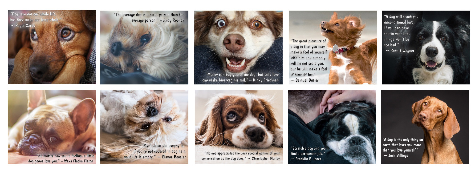 Dog Quotes Graphics for Facebook with Private Label Rights