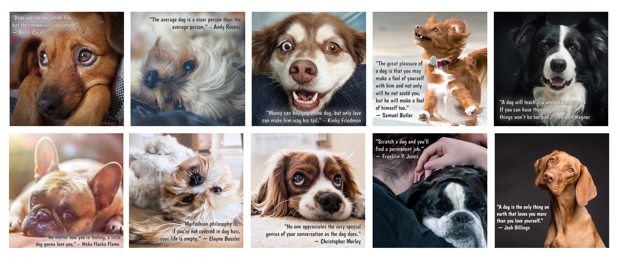 Inspirational Dog Quotes Graphics with PLR Rights