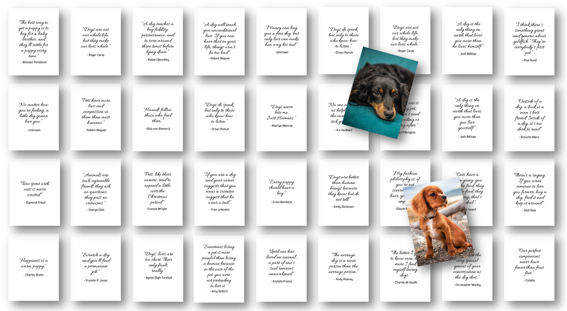 Dog and Pet Quotes Card Deck